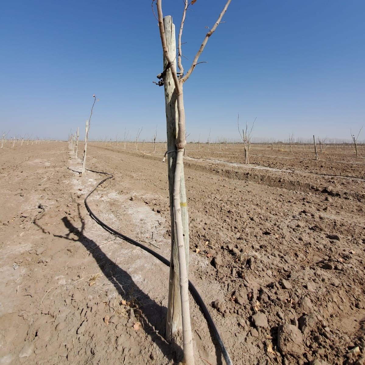Plantación y Riego